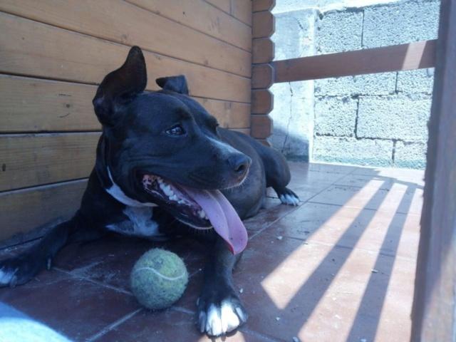Frida zwanger achtergelaten bij de poort van Canis y Felis 65393610