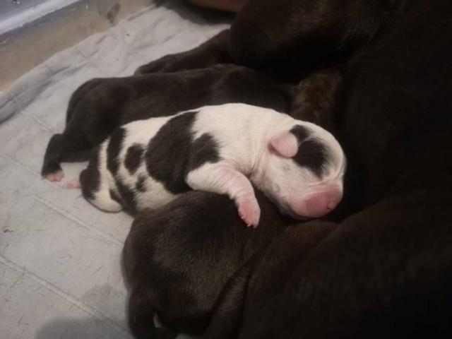 Frida zwanger achtergelaten bij de poort van Canis y Felis 65877410
