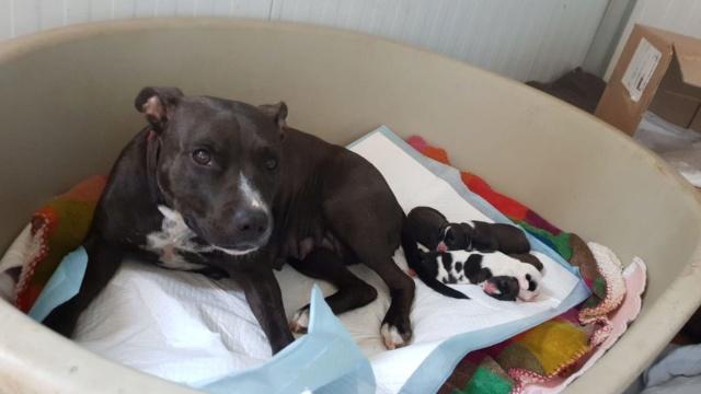 Frida zwanger achtergelaten bij de poort van Canis y Felis 664
