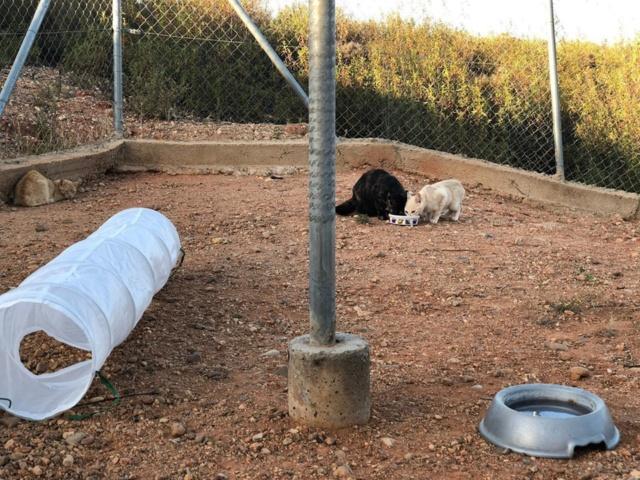 2 pallets voor Refugio la Candela 66684410