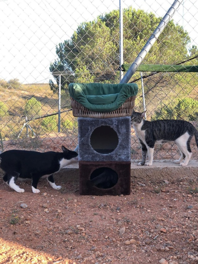 2 pallets voor Refugio la Candela 66756510