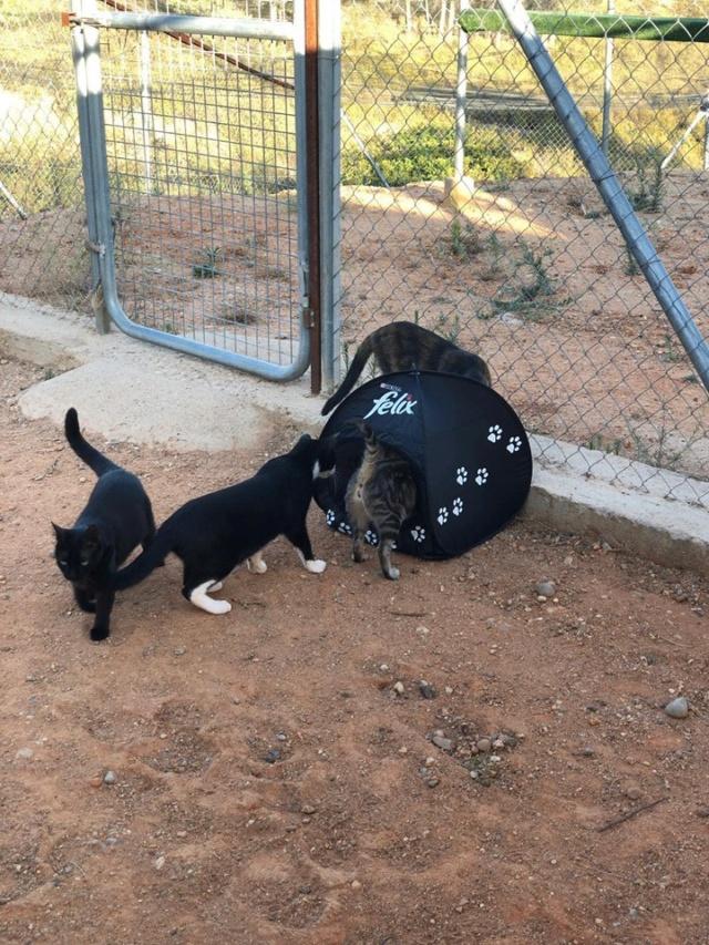 2 pallets voor Refugio la Candela 66780910
