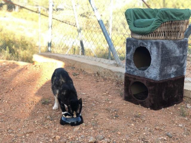 2 pallets voor Refugio la Candela 66835911