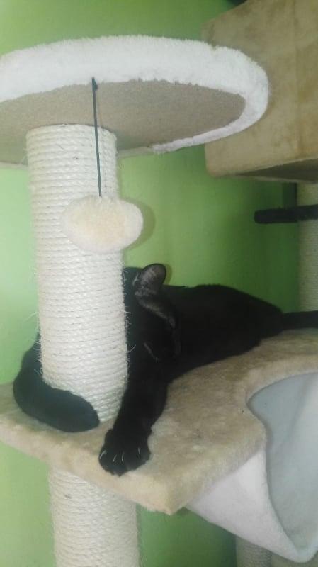 Krabpalen voor Canis y Felis - Blije katten 67067510