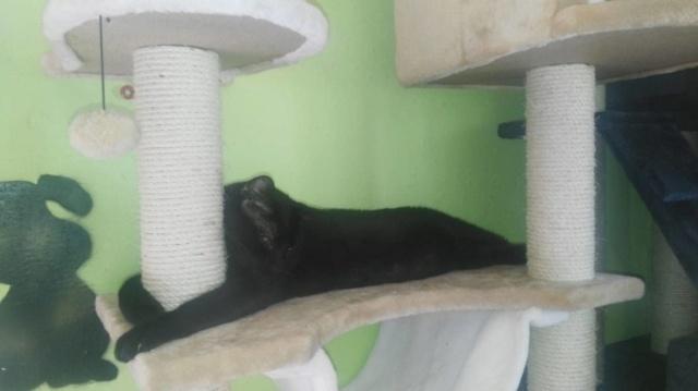 Krabpalen voor Canis y Felis - Blije katten 67170810