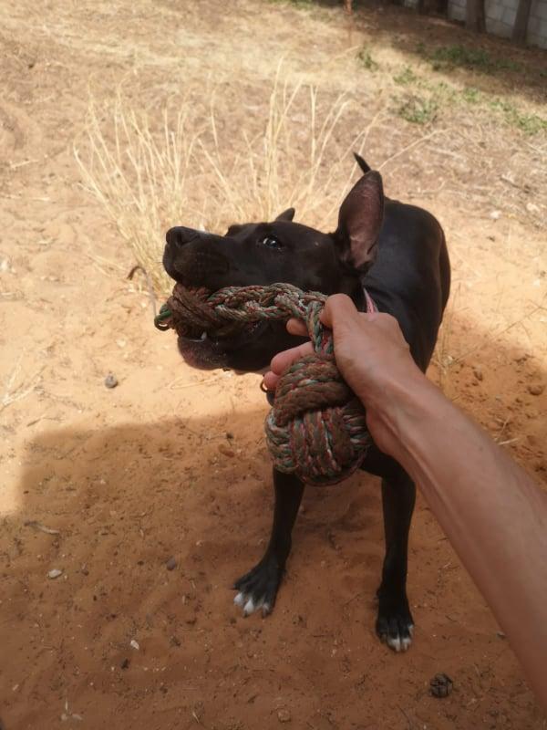 Frida zwanger achtergelaten bij de poort van Canis y Felis 67401410