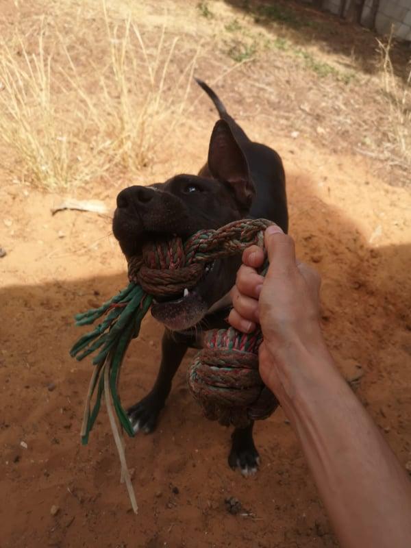 Frida zwanger achtergelaten bij de poort van Canis y Felis 67403610