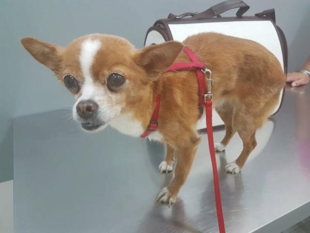 Kleine hond van de straat gehaald - Duna 67572110