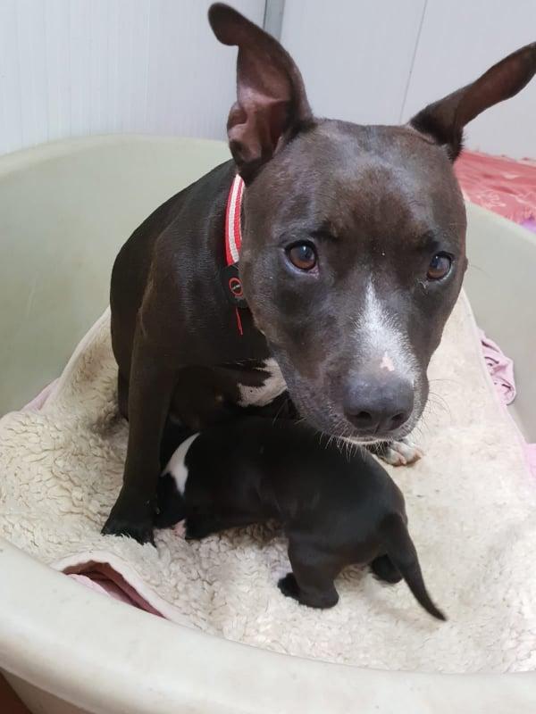 Frida zwanger achtergelaten bij de poort van Canis y Felis 67627010