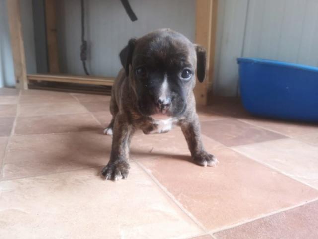 Frida zwanger achtergelaten bij de poort van Canis y Felis 67805510
