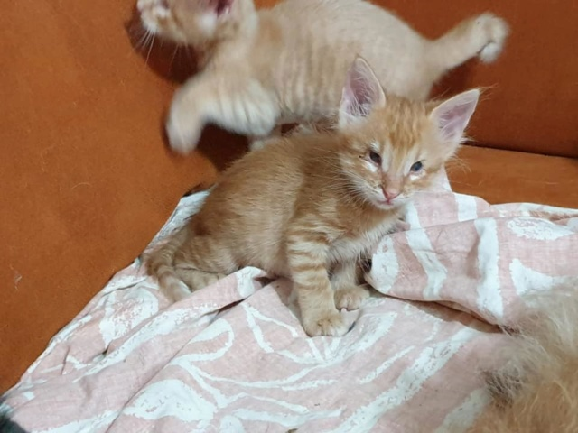 Kittens gedumpt in een zak 69280510