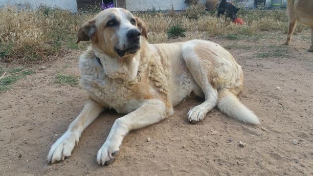 Canis Thor(Gedeeltelijke adoptie) 712
