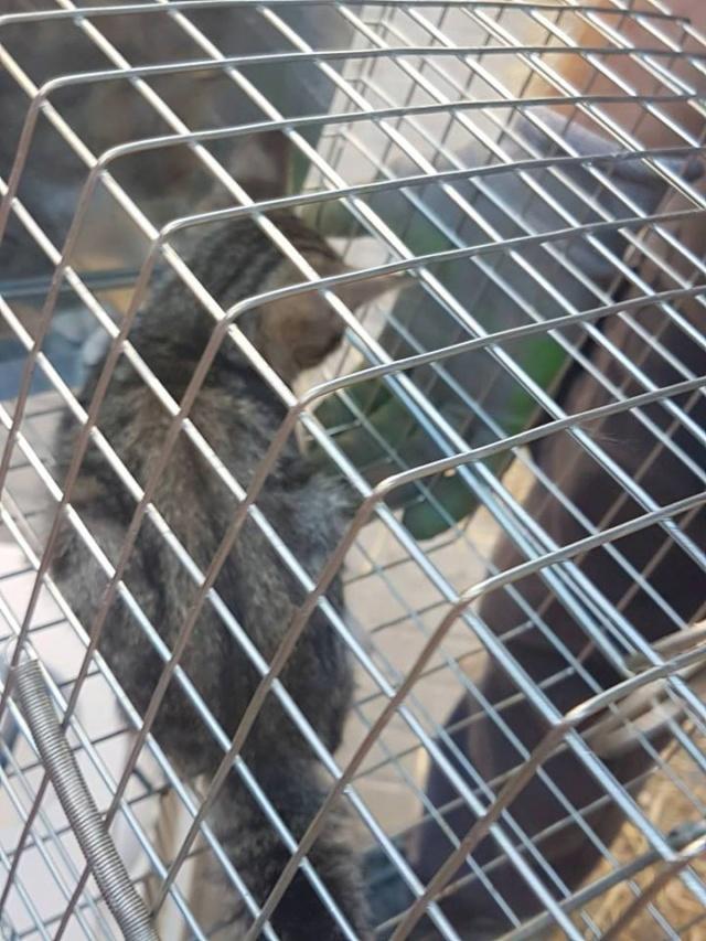 juli - Met gedoneerde vangkooi kitten gevangen 720