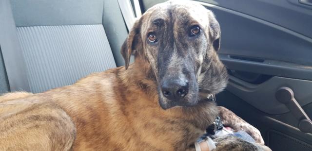 CA Nana (Gedeeltelijke adoptie) 739