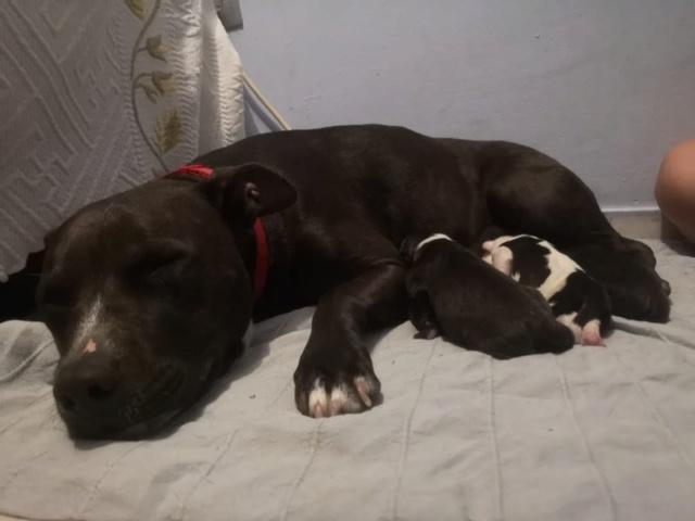 Frida zwanger achtergelaten bij de poort van Canis y Felis 754