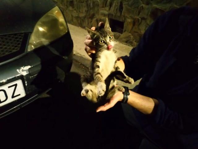 De katten van Cristina  834