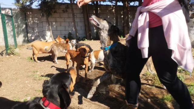 2 pallets voor Canis y Felis 935