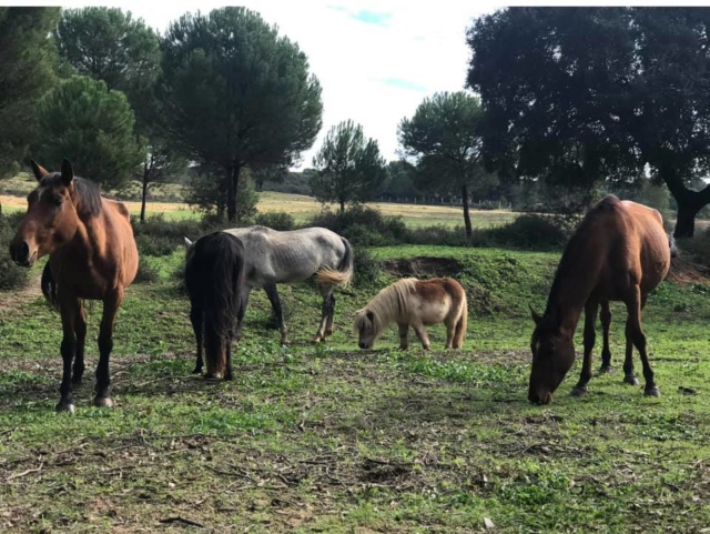 Refugio La Candela in grote problemen  A13