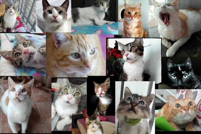 De katten van Cristina  Aaaaaa10