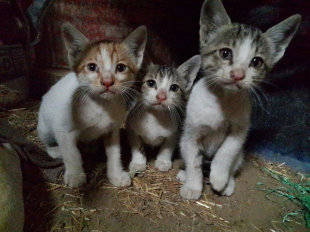 De katten van Cristina  Ccccc10