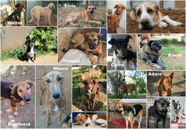 Hulp voor Canis y Felis Foster10
