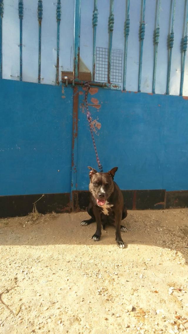 Frida zwanger achtergelaten bij de poort van Canis y Felis Fran112