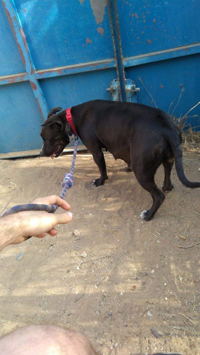 Frida zwanger achtergelaten bij de poort van Canis y Felis Fran411