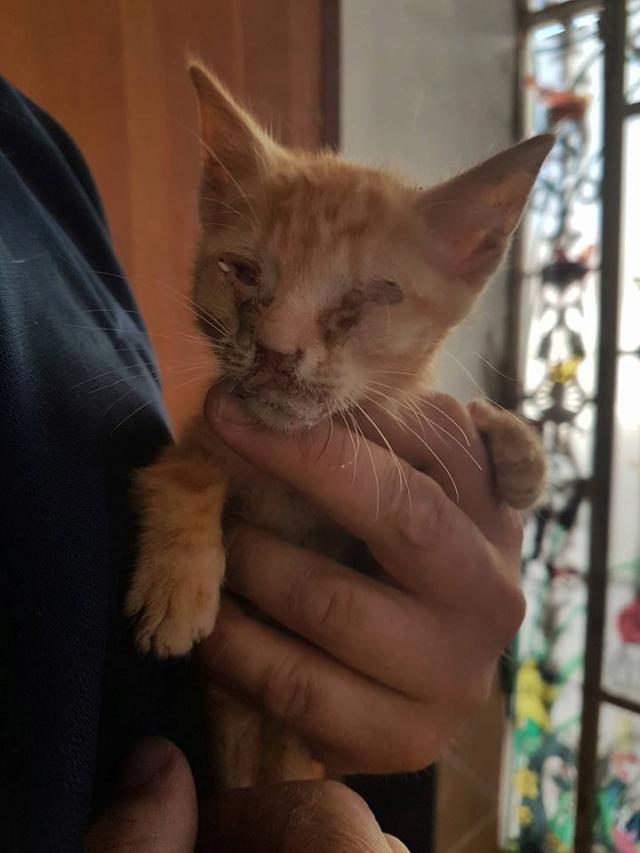 RIP kleine kitten Kitten11