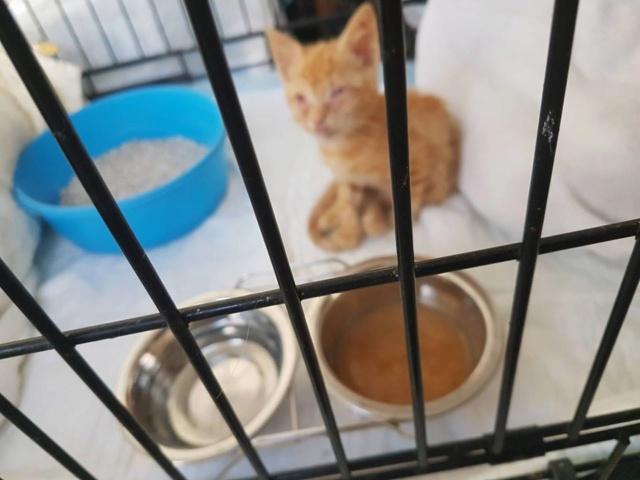 RIP kleine kitten Kitten12