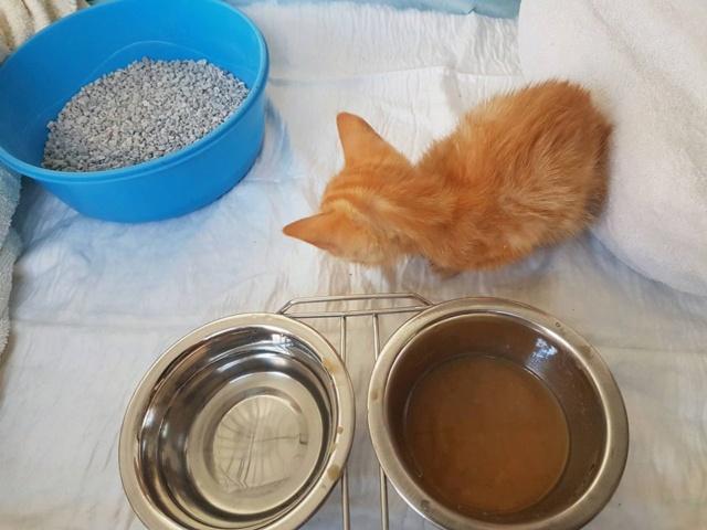RIP kleine kitten Kitten14