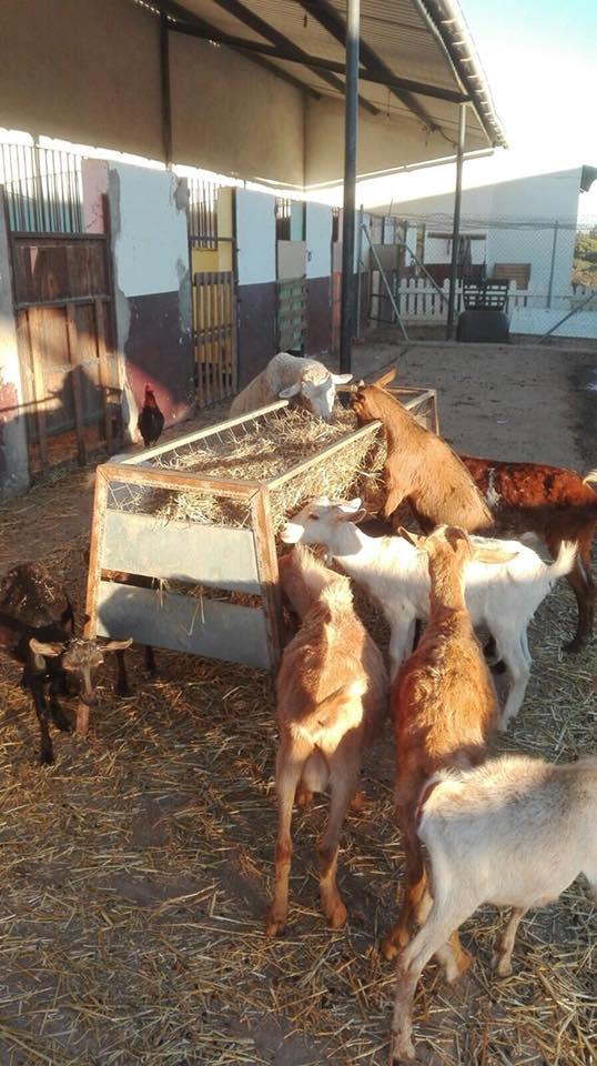 Refugio La Candela in grote problemen  L10