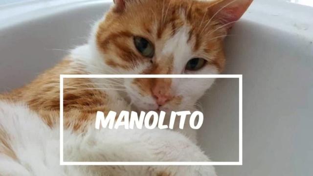 Canis - Manolito Manoli27
