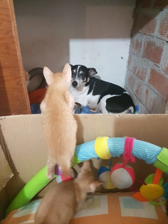 Kittens gedumpt in een zak Pancho10