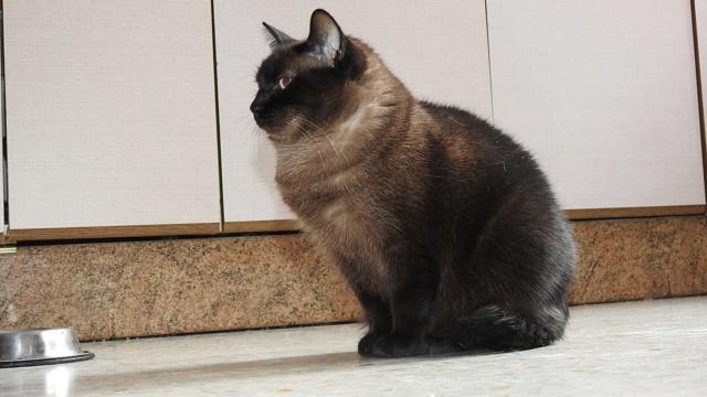 VF - Pany (kitten, doof en grotendeels blind) Pany10