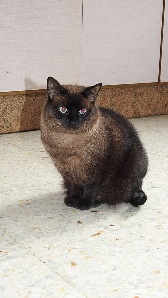 VF - Pany (kitten, doof en grotendeels blind) Pany110