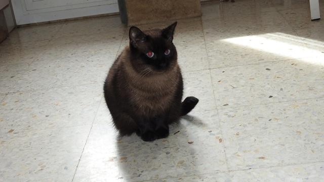 VF - Pany (kitten, doof en grotendeels blind) Pany210