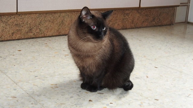 VF - Pany (kitten, doof en grotendeels blind) Pany310