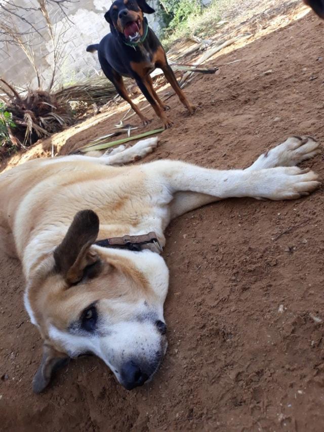 Canis Thor(Gedeeltelijke adoptie) Thor110
