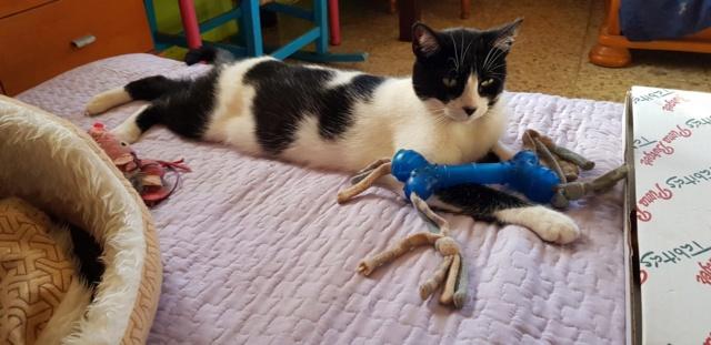 Krabpalen voor Canis y Felis - Blije katten Xxx10