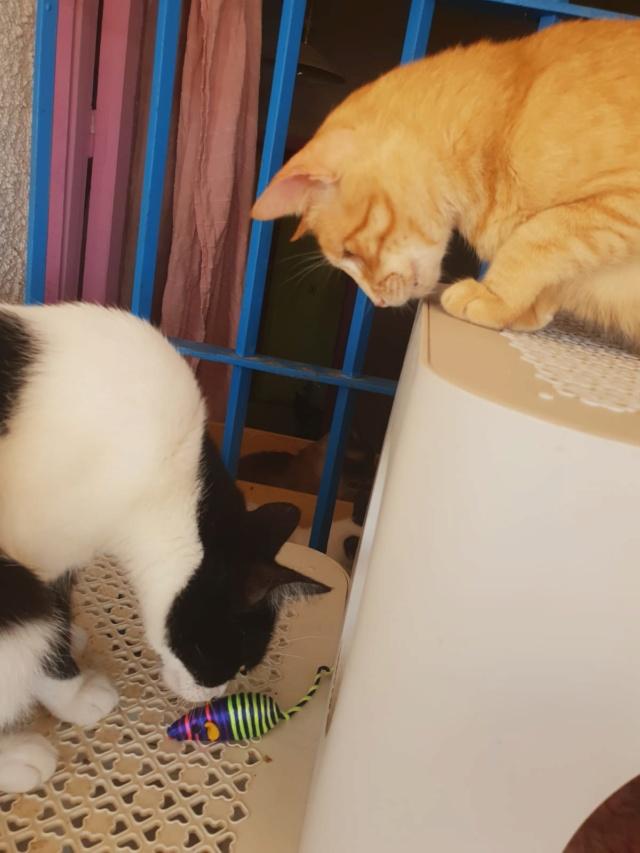 Krabpalen voor Canis y Felis - Blije katten Yyy10