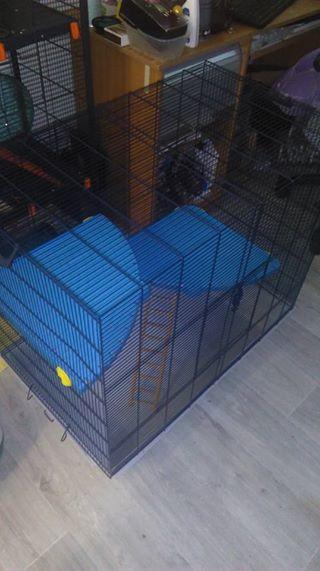 [A VENDRE] Cage Freddy 2  MAX dans le 59 19248110