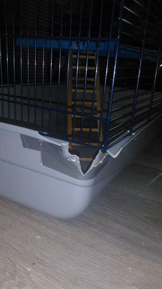 [A VENDRE] Cage Freddy 2  MAX dans le 59 19396910