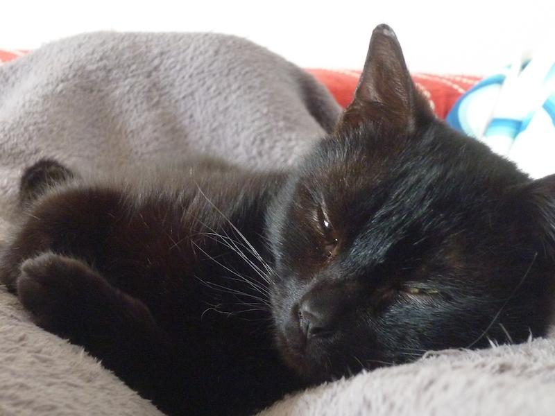 limbo - LIMBO, mâle Européen noir, né le 1er juillet 2013 P1040412