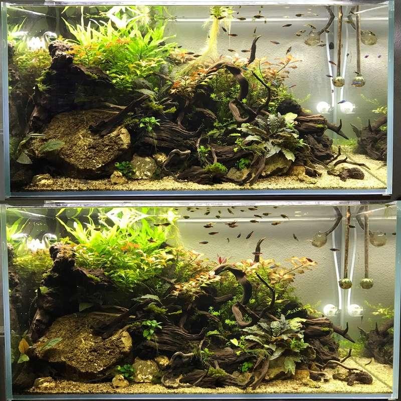 Aquarium 180L aquascapé - Page 4 29343511
