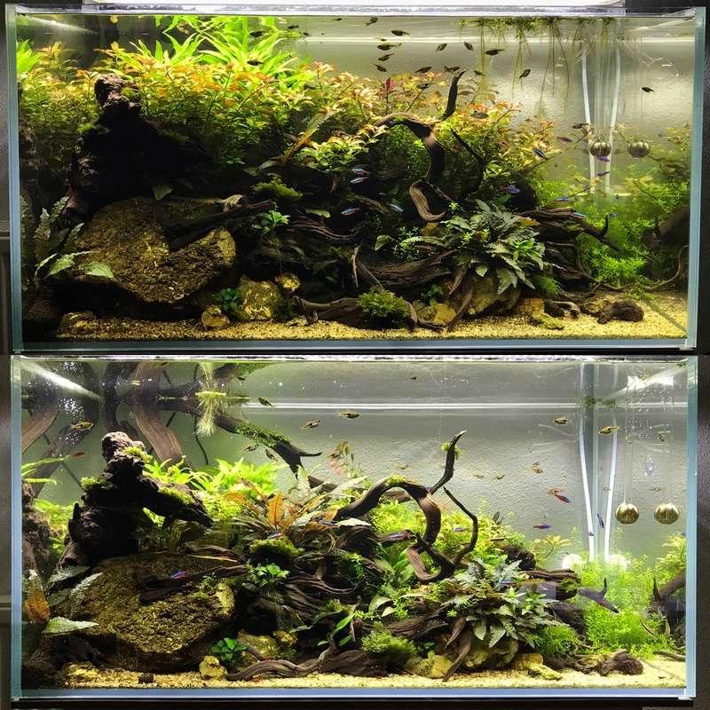Aquarium 180L aquascapé - Page 5 61622b10
