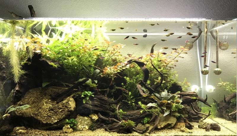 Aquarium 180L aquascapé - Page 4 Img_2010