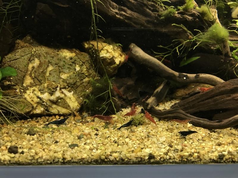 Aquarium 180L aquascapé - Page 5 Img_2113