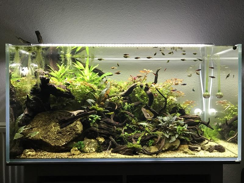 Aquarium 180L aquascapé - Page 5 Img_2115