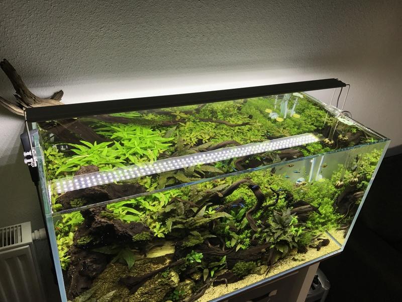 Aquarium 180L aquascapé - Page 5 Img_2611