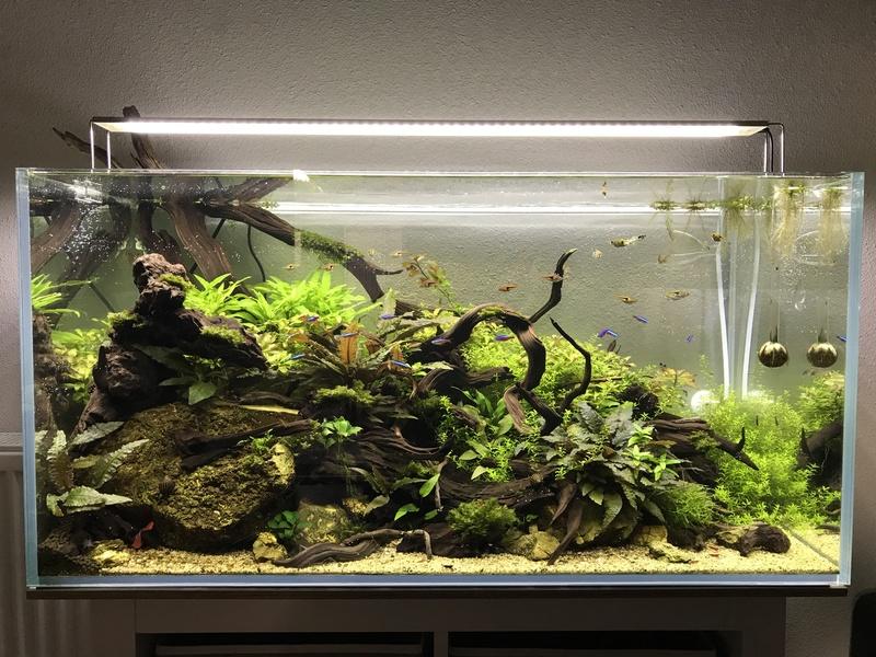 Aquarium 180L aquascapé - Page 5 Img_2612
